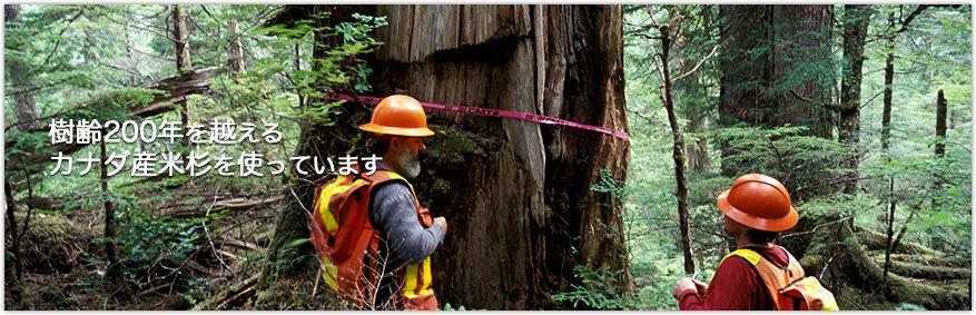 樹齢200年を越えるカナダ産米杉を使っています